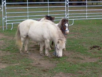 Horses Up For Adoption  pic 4 from The Horse Shoe Equine Rescue