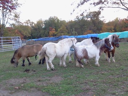 Horses Up For Adoption  pic 1 from The Horse Shoe Equine Rescue