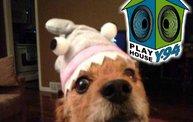 Playhouse PetArazzi Batch #5 3