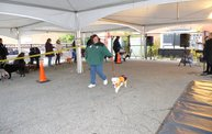 Doggie Costume Contest 2013 16