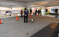 Doggie Costume Contest 2013 15