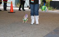 Doggie Costume Contest 2013 11