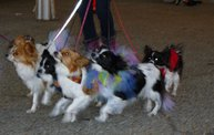 Doggie Costume Contest 2013 30