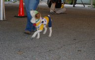 Doggie Costume Contest 2013 25