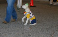 Doggie Costume Contest 2013 24
