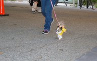 Doggie Costume Contest 2013 23