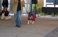 Doggie Costume Contest 2013 21