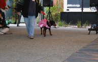 Doggie Costume Contest 2013 20