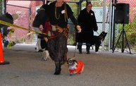 Doggie Costume Contest 2013 13