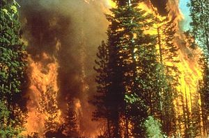 A bipartisan and bicameral group of western lawmakers pressed the U.S. Department of Agriculture to partner with the timber industry to reduce wildfire risks in fire-prone areas. Wikimedia.org