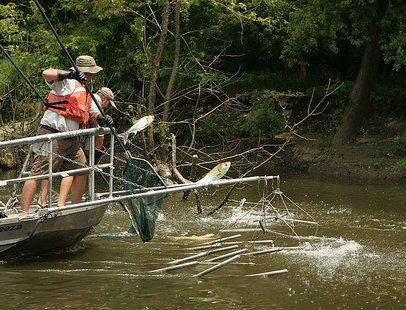 Electrofishing for the asian carp invasive species. By U.S. Fish and Wildlife Service [Public domain], via Wikimedia Commons