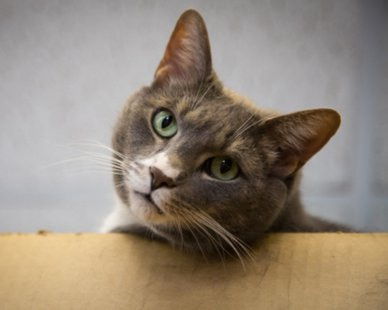 Sammy the Cat (photo courtesy Harbor Humane Society)