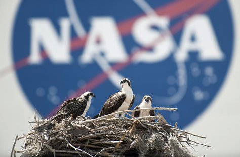 A family of Osprey are seen outside the NASA Kennedy Space Center Vehicle Assembly Building (VAB) in Cape Canaveral, Florida on Thursday May