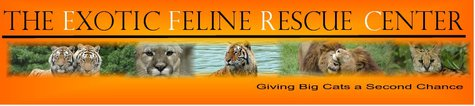 Exotic Feline Rescue Center banner logo