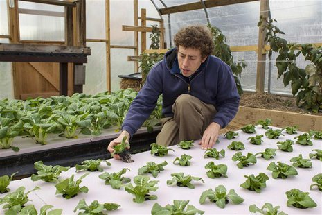 Chester County Food Bank agricultural director Bill Shick examines young lettuce plants growing in a hydroponic bed in a greenhouse, where t