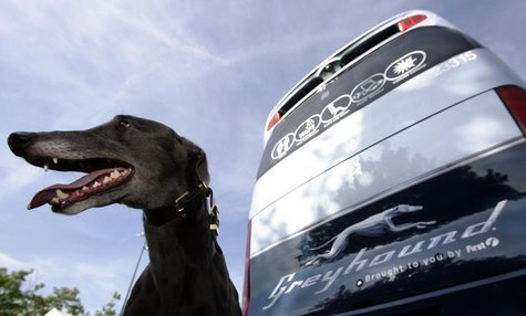 A greyhound sits beside a Greyhound bus at the launch of FirstGroup's new Greyhound UK service in London August 19, 2009. REUTERS/Luke MacGr