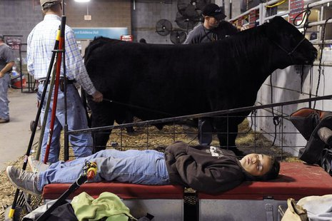 Kolin Quinn, from Geronimo, Oklahoma, takes a nap as others prepare cattle for the Market Beef Showmanship competition at the 113th American