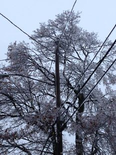 Ice, wires and trees can be a very bad mix at this time of the year. (photo courtesy Consumers Energy}