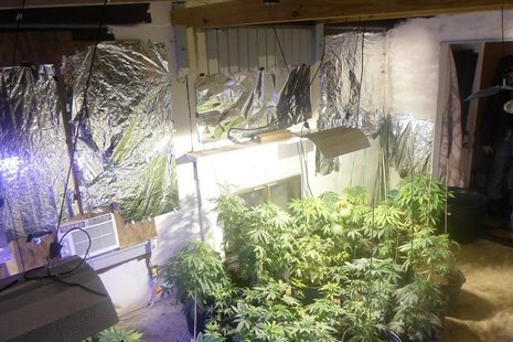 Marijuana plants found at the rented home of former fugitive Aubrey Lee Price in Marion County, Florida, is shown in this undated handout ph