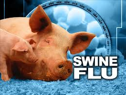 This same variant of the H1N1 swine flu virus caused the pandemic in 2009.