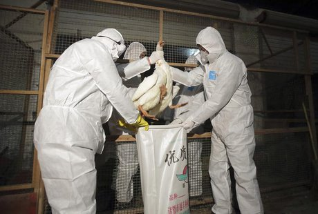 Health officials in protective suits put a goose into a sack as part of preventive measures against the H7N9 bird flu at a poultry market in