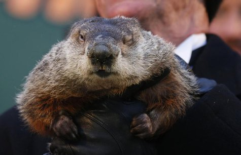 Famed weather prognosticating groundhog Punxsutawney Phil has only one eye open as he prepares to make his annual prediction on Gobbler's Kn