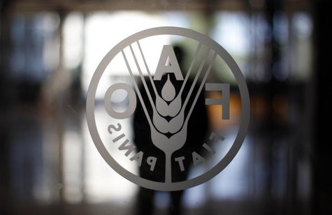 A FAO's logo is seen at the FAO headquarters in Rome September 6, 2012. The situation in the food market is different from the crisis of 200