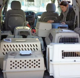 Workers load animals into carriers after a fire at the Adams County Humane Society