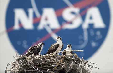 A family of Osprey are seen outside the NASA Kennedy Space Center Vehicle Assembly Building in Cape Canaveral, Florida in this file photo ta