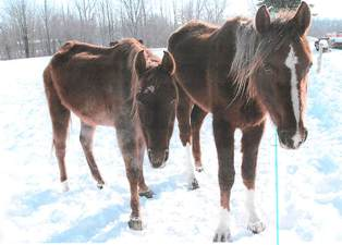 Horses from Warren Road animal cruelty case