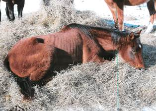 Horse from Warren Road animal cruelty case