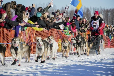 Last year's second place winner Aliy Zirkle greets fans out of the start gate at the official restart of the Iditarod dog sled race in Willo