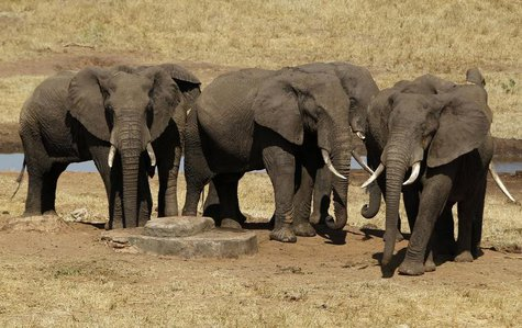Elephants are seen near a water point during their aerial census at the Tsavo West national park within the Tsavo-Mkomazi ecosystem, southea