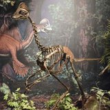 A mounted replica skeleton of the new oviraptorosaurian dinosaur species Anzu wyliei on display in the Dinosaurs in Their Time exhibition at