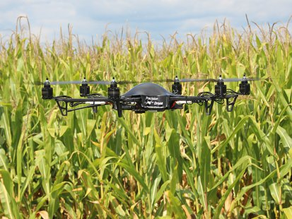 drone in corn field