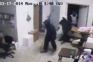 Verizon Store break-in, Coldwater MI, March 17, 2014 (photo courtesy of Coldwater Police Department)