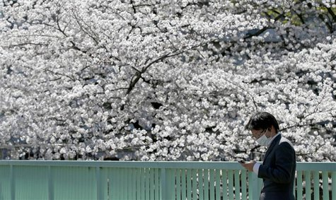 A businessman uses a mobile phone in front of cherry blossoms in full bloom in Tokyo March 31, 2014. REUTERS/Toru Hanai