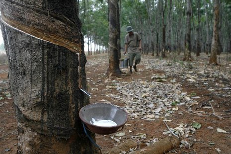 A farmer collects latex at a rubber plantation in Buon Ma Thuot City, in Vietnam's central highland April 2, 2010. REUTERS/Kham