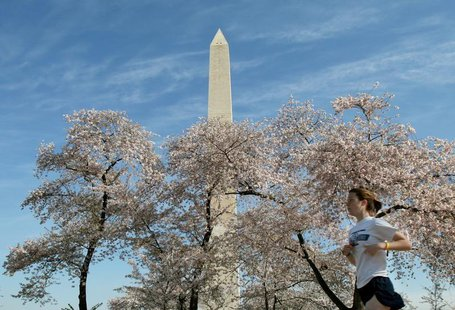 The Washington Monument looms above blooming cherry blossoms and a jogger, out for an early morning run near the tidal basin in Washington,