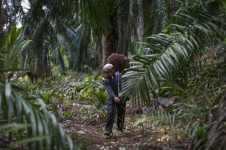 Indonesian worker Abdul Rahim Gani, 32, carries oil palm fruits at Felda Bukit Cerakah in district of Klang outside Kuala Lumpur April 16, 2