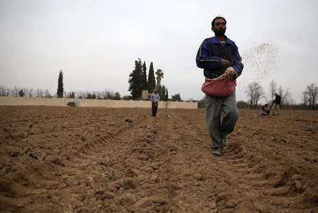 Farmers plant wheat in eastern al-Ghouta, near Damascus December 26, 2013. REUTERS/Mohammed Abdullah