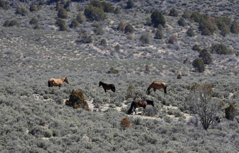 Part of a band of wild horses graze in the Nephi Wash area outside Enterprise, Utah, April 10, 2014. REUTERS/Jim Urquhart