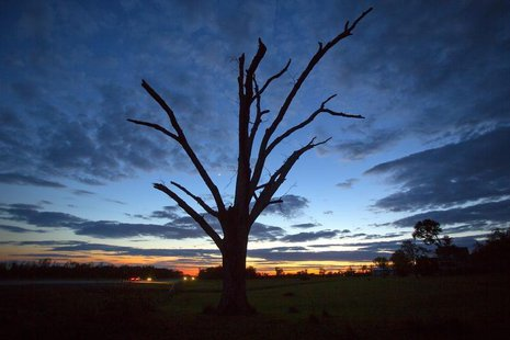 An oak tree that has lost all its leaves and most of its branches from a tornado is pictured at sunset near Vilonia, Arkansas May 1, 2014. R