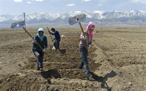 Uighur farmers hoe their farmlands to prepare for growing potatoes in Barkol Kazahk Autonomous county, Xinjiang Uighur Autonomous Region May