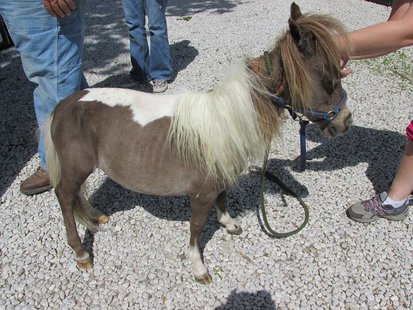 Mini Horse pic 2 provided by Indiana State Police