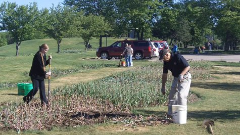 Community Tulip Pull at Window on the Waterfront Park in Holland, MI