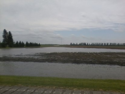Field Flooding