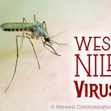 West Nile Virus image
