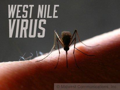 West Nile Virus image