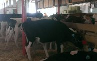 Wisconsin Valley Fair 2014 5